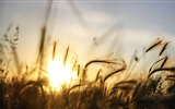 Title:grass sunset-Landscape with beat wallpaper Views:3174