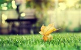 Title:leaf on grass-Landscape with beat wallpaper Views:3517