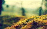 Title:moss-Landscape with beat wallpaper Views:3327