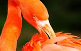 Title:2013 Animal World Photography Widescreen Wallpapers Views:8621