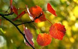 Title:red autumn leaves-2012 Macro Photography Featured Wallpaper Views:4180