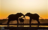 Title:Elephant Trio Namibia-National Geographic Best Wallpapers of 2012 Views:4226
