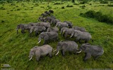 Title:Elephants Uganda-National Geographic Best Wallpapers of 2012 Views:5998