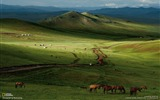 Title:Horses Mongolian Steppe-National Geographic Best Wallpapers of 2012 Views:19040