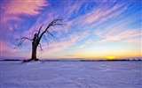 Title:Lonely Old Tree Sunset-beautiful natural landscape Wallpaper Views:13593