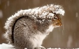 Title:Squirrel in Snow-National Geographic Best Wallpapers of 2012 Views:3941