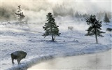 Title:bison in winter-winter natural landscape wallpaper Views:4024