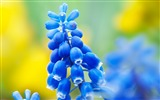 Title:Breath of spring-beautiful flowers photography wallpaper Views:14719