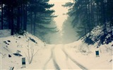 Title:car snow tracks through the forest road-winter natural landscape wallpaper Views:7026