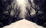 Title:park alley-winter natural landscape wallpaper Views:4073
