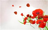 Title:poppies-Beautiful flowers HD wallpaper Views:23855