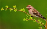 Title:Beautiful Bird-Natural animal photography Wallpaper Views:4765