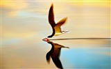 Title:Bird On Water-Animal world photography wallpaper Views:4670