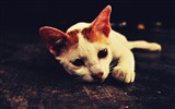 Title:Cute Cat-Natural animal photography Wallpaper Views:3394