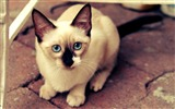 Title:Cute White Cat-Natural animal photography Wallpaper Views:3188