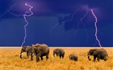 Title:Elephants in the field-Animal world photography wallpaper Views:2714