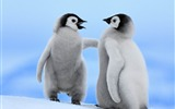Title:Emperor Penguins-Natural animal photography Wallpaper Views:4943