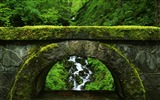 Title:old green bridge-Natural scenery HD Wallpaper Views:7433
