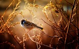 Title:Sparrow-Animal World HD wallpaper Views:2920