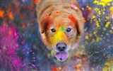 Title:colorful dust-Animal World HD wallpaper Views:4078