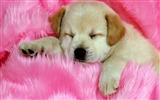 Title:dog muzzle down puppy-Animal HD wallpaper Views:3514