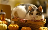 Title:Cat in the basket-high quality desktop HD wallpaper Views:2878