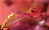 Title:Petals with water drops macro-flower photography wallpaper Views:3598