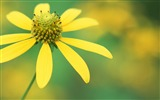 Title:Yellow flowers-flower photography wallpaper Views:3008