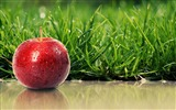 Title:grass ripe apple red-food drinks HD wallpaper Views:3885