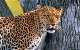 Title:wild animals Photography widescreen wallpaper Views:11713