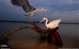 Title:Bird Hunter Pakistan-National Geographic wallpaper Views:3249
