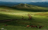 Title:Horses Mongolian Steppe-National Geographic wallpaper Views:6784