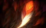 Title:feather art-May HD quality wallpaper Views:2979