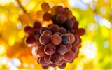 Title:grapes-High quality HD Wallpaper Views:2948