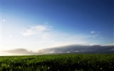 Title:green field close up-Summer scenery wallpaper Views:2932