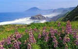 Title:mountains coast sea waves flowers greens-landscape widescreen wallpaper Views:2508