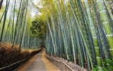 Title:Dense bamboo forest-Nature Landscape wallpaper Views:5004