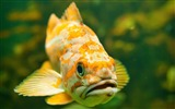 Title:Fish in water-Animal Photography wallpapers Views:3771