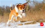 Title:Snow puppy running jump-Animal photo desktop wallpaper Views:3770