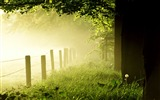 Title:Woods early in the morning mist-Nature Landscape wallpaper Views:3196