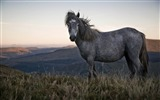 Title:beautiful wild horse-Animal Photography wallpaper Views:4328
