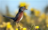 Title:bird sky flowers nature-Bird Photography HD wallpaper Views:3730