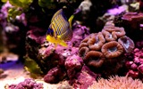 Title:corals sea fish-Animal photo desktop wallpaper Views:4151