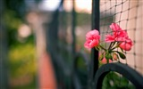 Title:fence flowers-Plant Macro HD wallpaper Views:2830