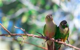 Title:parrots-Bird Photography HD wallpaper Views:2991