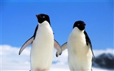 Title:penguins couple north winter-Animal photo desktop wallpaper Views:51724