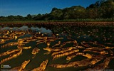 Title:Caimans at Night Brazil-National Geographic wallpaper Views:5360