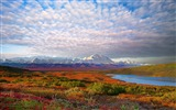 Title:Denali National Park Beautiful Landscape HD Wallpaper Views:6970