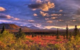Title:Denali National Park Beautiful Landscape HD Wallpaper 05 Views:2243
