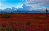 Title:Denali National Park Beautiful Landscape HD Wallpaper 06 Views:2192